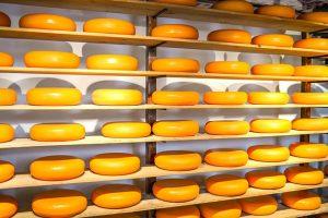 hollanda-peyniri